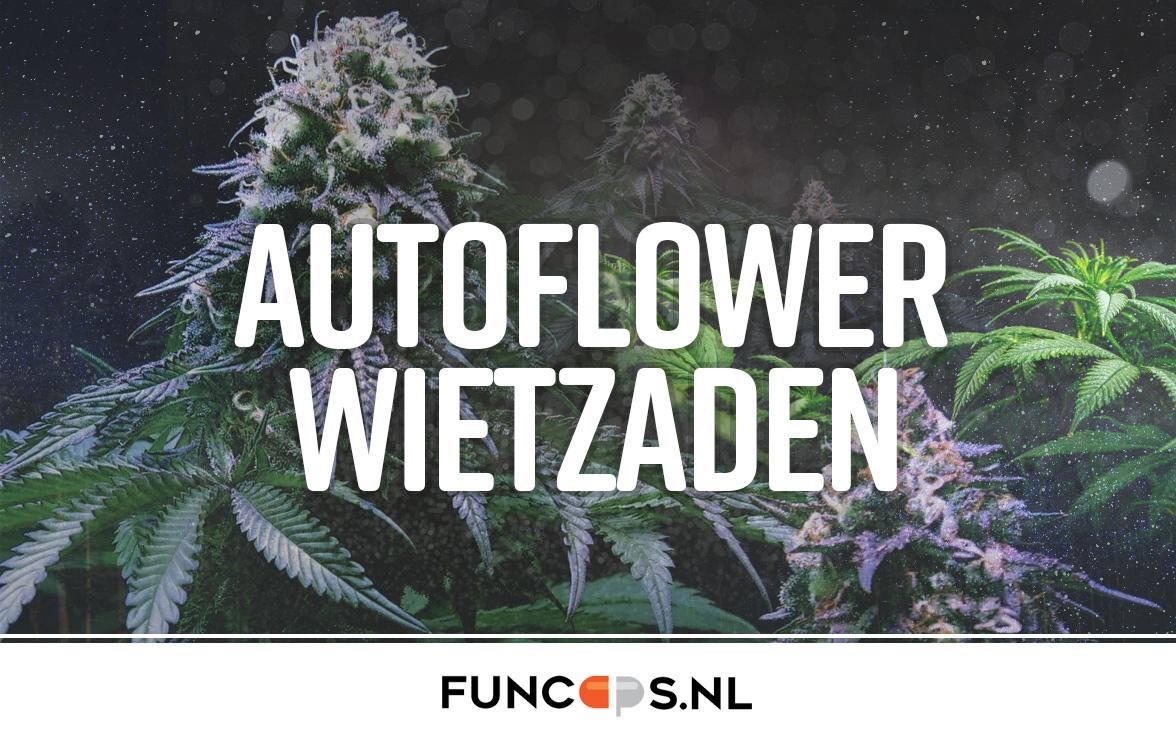 Autoflower wietzaden
